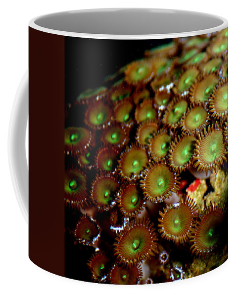 Underwater Coffee Mug featuring the photograph Button Polyps by Anthony Jones