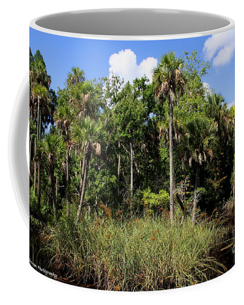 Cotee River Coffee Mug featuring the photograph Cabbage Palms Along The Cotee River by Barbara Bowen