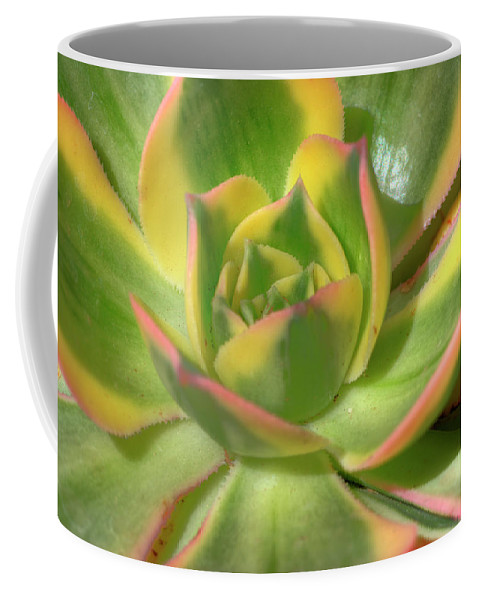 Cactus Coffee Mug featuring the photograph Cactus 4 by Jim And Emily Bush