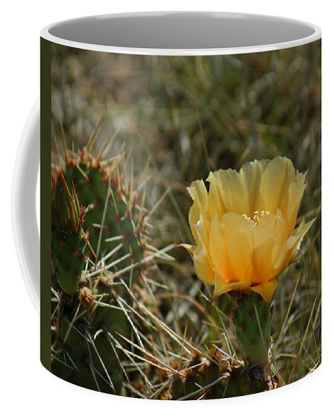 Cactus Coffee Mug featuring the photograph Cactus Bloom by Ernie Echols