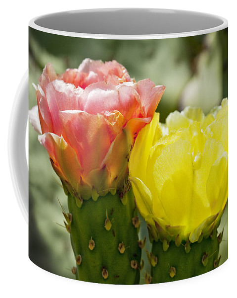 Cactus Flowers Coffee Mug featuring the photograph Cactus Bouquet by Kelley King