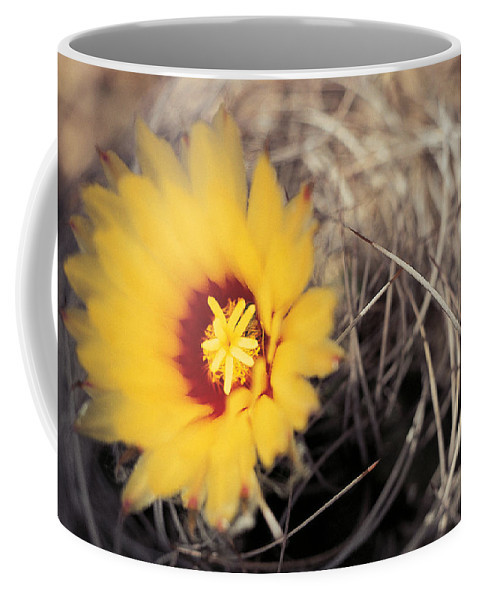 Cactus Coffee Mug featuring the photograph Cactus Flower by American School