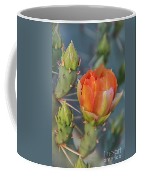 Flower Coffee Mug featuring the photograph Cactus Flower And Buds by Amy Sorvillo
