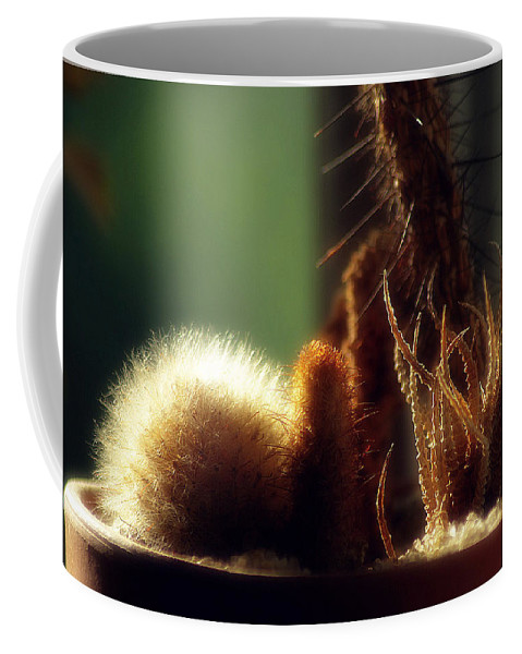 2d Coffee Mug featuring the photograph Cactus Light by Brian Wallace