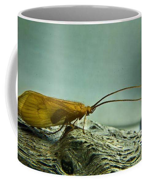 Caddisfly Coffee Mug featuring the photograph Caddisfly by Douglas Barnett