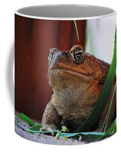 Cain Toad Coffee Mug featuring the photograph Cain Toad by Robert Meanor