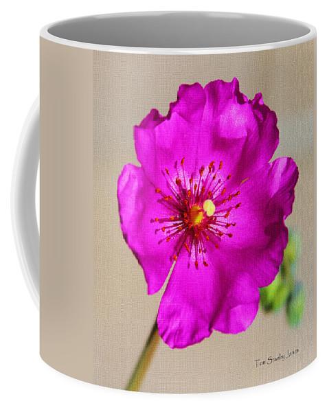 Calandrinia Flower Coffee Mug featuring the photograph Calandrinia Flower by Tom Janca