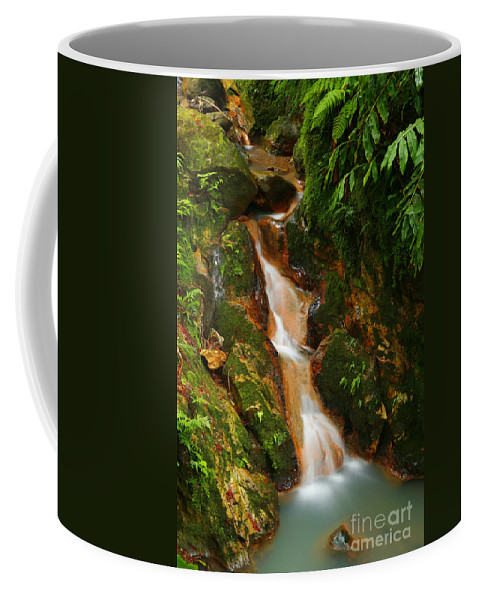 Azores Coffee Mug featuring the photograph Caldeira Velha Park by Gaspar Avila