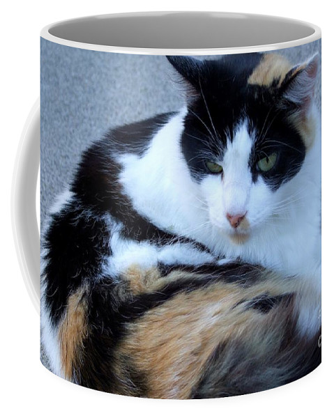 Kauai Animals Coffee Mug featuring the photograph Calico 3 by Mary Deal