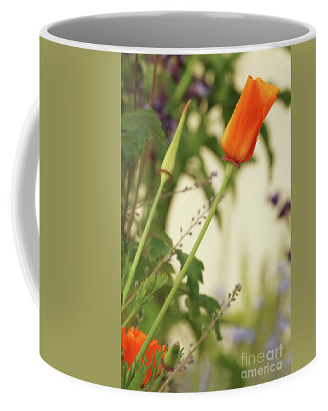 California Poppy Coffee Mug featuring the photograph California Poppies In The Garden by Terri Waters