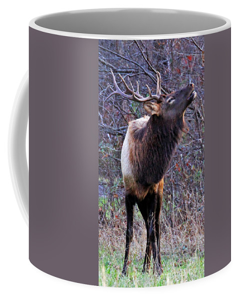 Bull Elk Coffee Mug featuring the photograph Call Of The Wild by Jennifer Robin