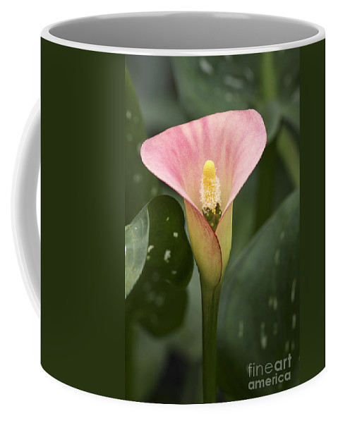 Flower Coffee Mug featuring the photograph Calla In The Mist by Deborah Benoit