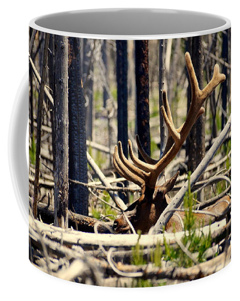 Antlers Coffee Mug featuring the photograph Camouflaged by Beth Collins
