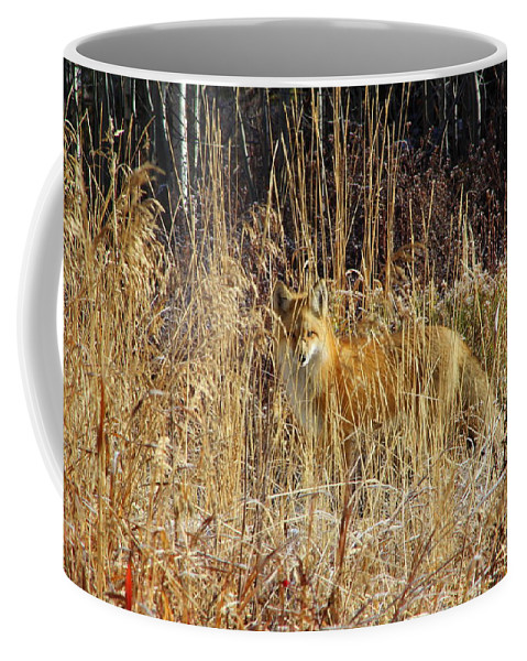 Fox Coffee Mug featuring the photograph Can You See Me by Fiona Kennard