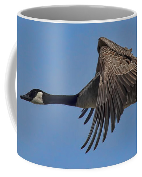 Dale Kauzlaric Coffee Mug featuring the photograph Canada Goose Coming In For A Landing by Dale Kauzlaric