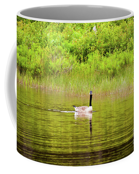 Canadian Coffee Mug featuring the photograph Canadian Goose by Kevin Gladwell