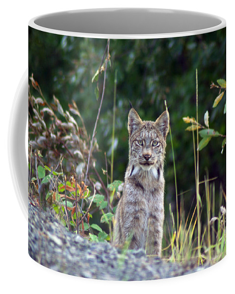 Lynx Coffee Mug featuring the photograph Canadian Lynx by Louise Magno
