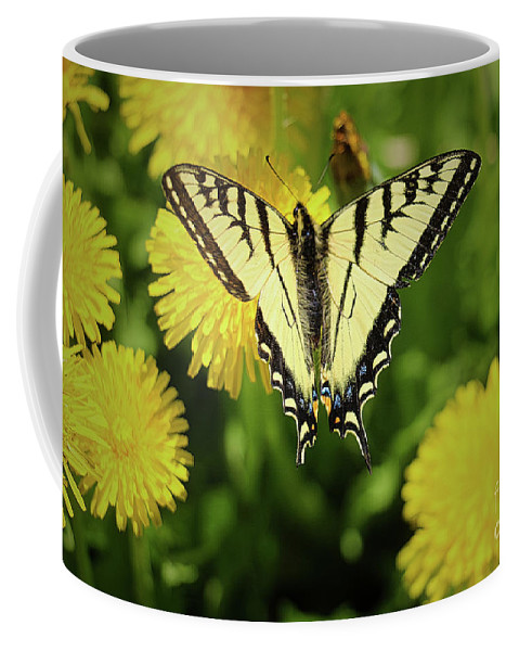 Butterfly Coffee Mug featuring the photograph Canadian Swallowtail Butterfly by Amber D Meredith Photography