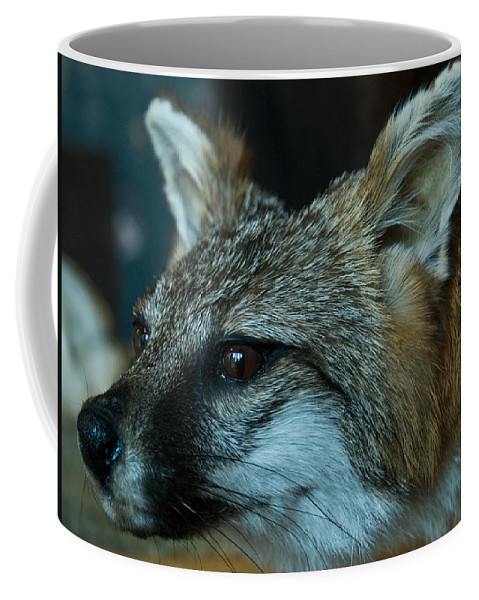 Canis Coffee Mug featuring the photograph Canis Species by Douglas Barnett