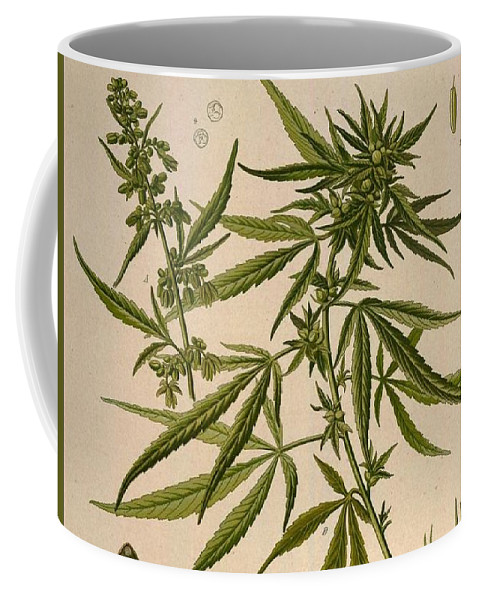 Cannabis Coffee Mug featuring the painting Cannabis Sativa by Unknown