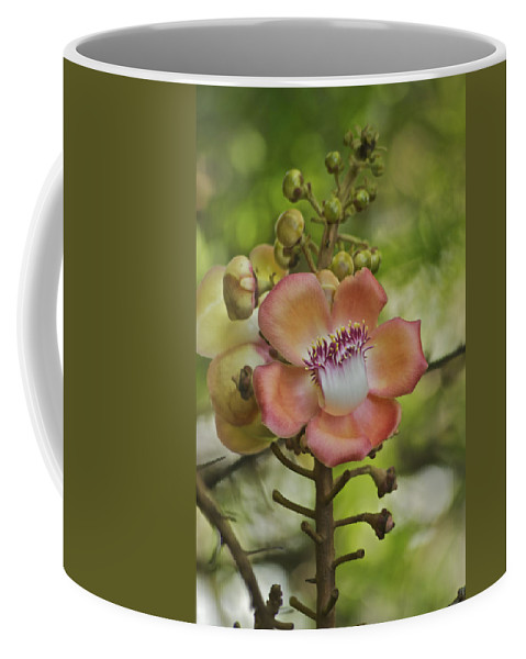 Flower Coffee Mug featuring the photograph Cannonball Blossom by Michael Peychich