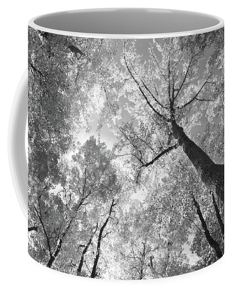 Woods Coffee Mug featuring the photograph Canopy by Charles Owens