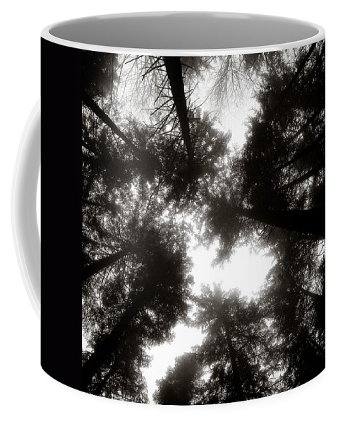 Trees Coffee Mug featuring the photograph Canopy by Dave Bowman