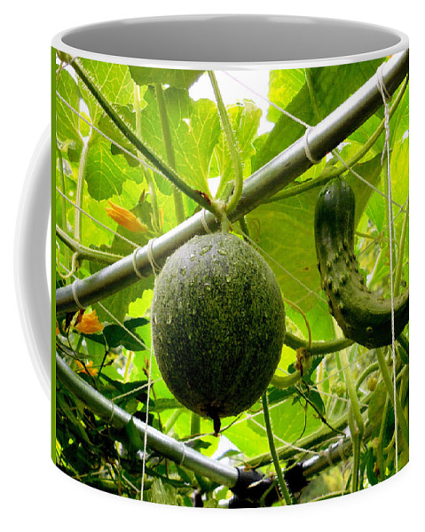 Thai Coffee Mug featuring the painting Cantaloupe And Hanging On Tree 1 by Jeelan Clark