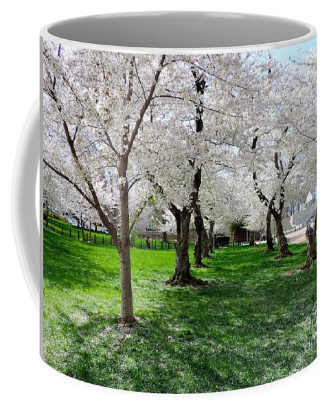 washington Dc Coffee Mug featuring the photograph Capitol Gardens Cherry Trees by Doug Swanson