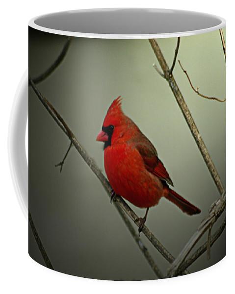 Jenny Gandert Coffee Mug featuring the photograph Cardinal And The Setting Sun by Jenny Gandert