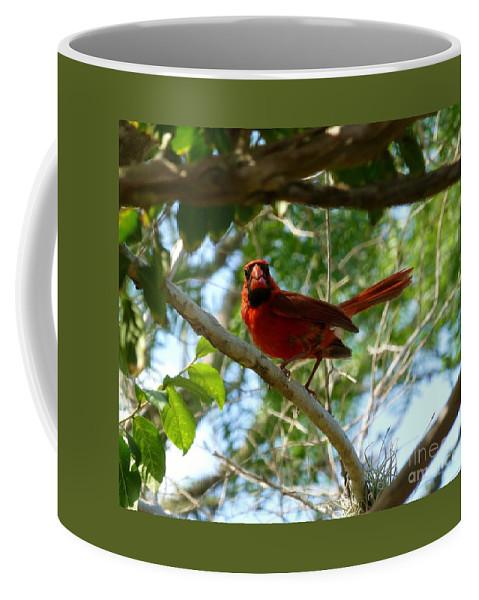 Cardinal Coffee Mug featuring the photograph Cardinal by As the Dinosaur Flies Photography
