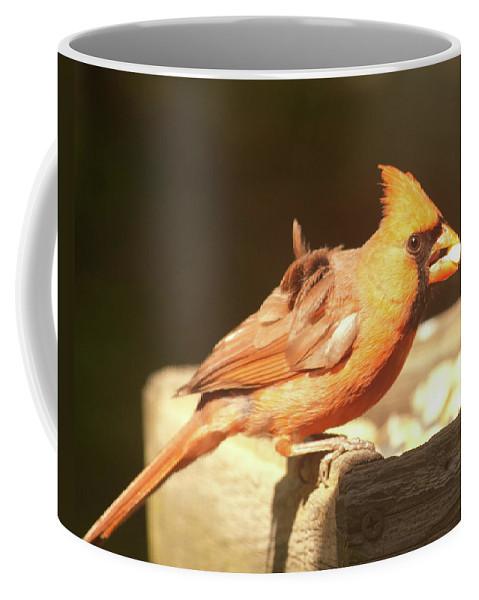 Cardinal Coffee Mug featuring the photograph Cardinal by Diane Schuler
