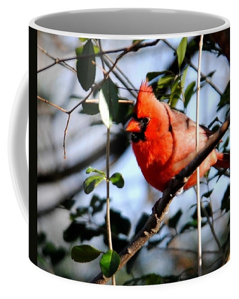 Cardinal Coffee Mug featuring the photograph Cardinal IIi by Jai Johnson