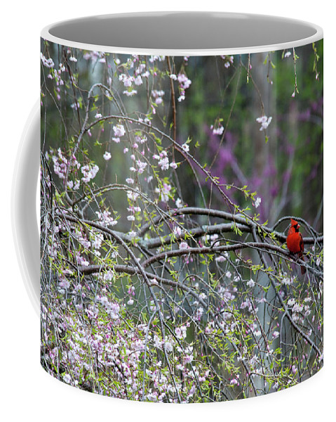 Bird Coffee Mug featuring the photograph Cardinal In Flowering Tree by David Arment