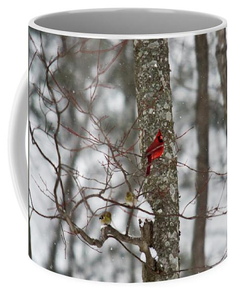 Cardinal Coffee Mug featuring the photograph Cardinal In Snow Storm by Douglas Barnett
