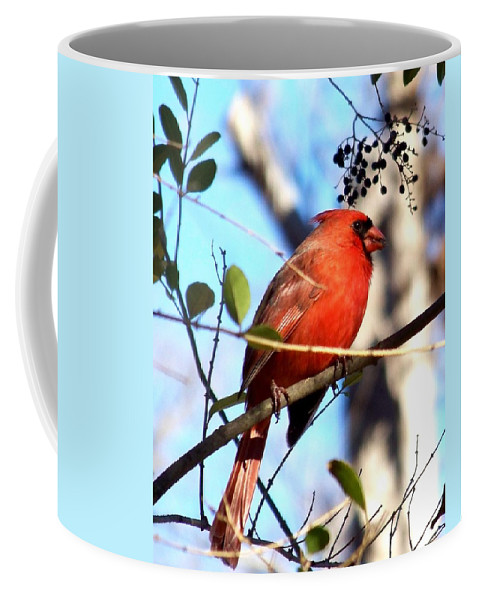 Cardinal Coffee Mug featuring the photograph Cardinal by Jai Johnson