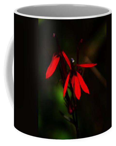 Digital Photograph Coffee Mug featuring the photograph Cardinal Plant by David Lane