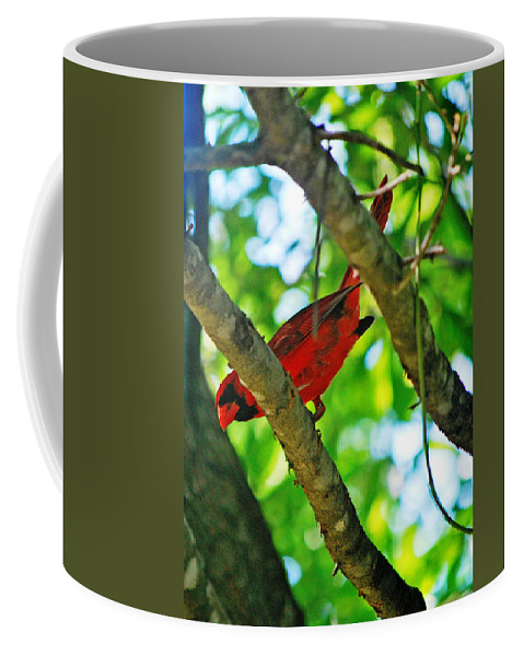 Cardinal Coffee Mug featuring the photograph Cardinal Red by Adele Moscaritolo