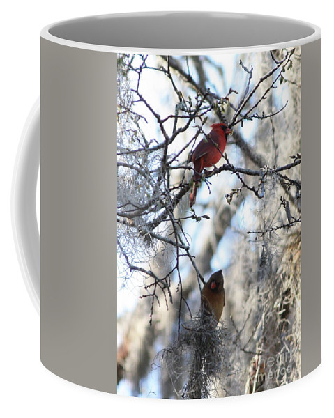 Wildlife Coffee Mug featuring the photograph Cardinals In Mossy Tree by Carol Groenen