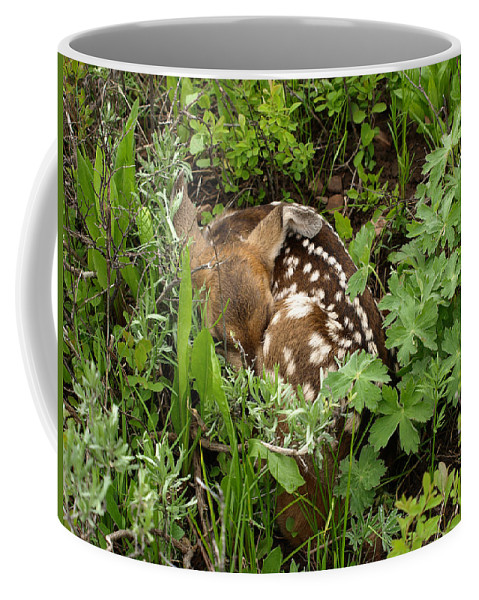Fawn Coffee Mug featuring the photograph Careful Where You Step by DeeLon Merritt