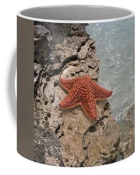 Starfish Coffee Mug featuring the photograph Caribbean Starfish by Betsy Knapp