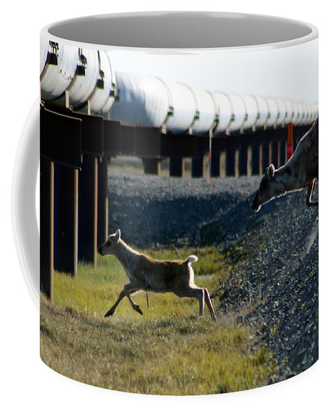 Caribou Coffee Mug featuring the photograph Caribou Cow And Fawn by Anthony Jones
