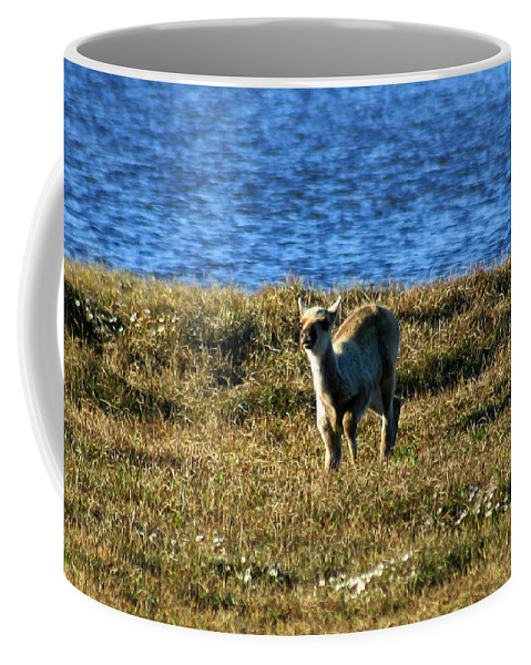 Fawn Coffee Mug featuring the photograph Caribou Fawn by Anthony Jones