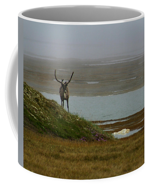 Caribou Coffee Mug featuring the photograph Caribou Fog by Anthony Jones