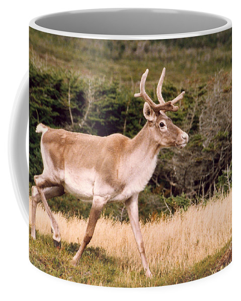 Nature Coffee Mug featuring the photograph Caribou by Mary Mikawoz