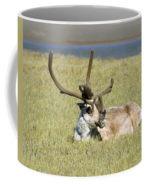 Caribou Coffee Mug featuring the photograph Caribou Rest by Anthony Jones