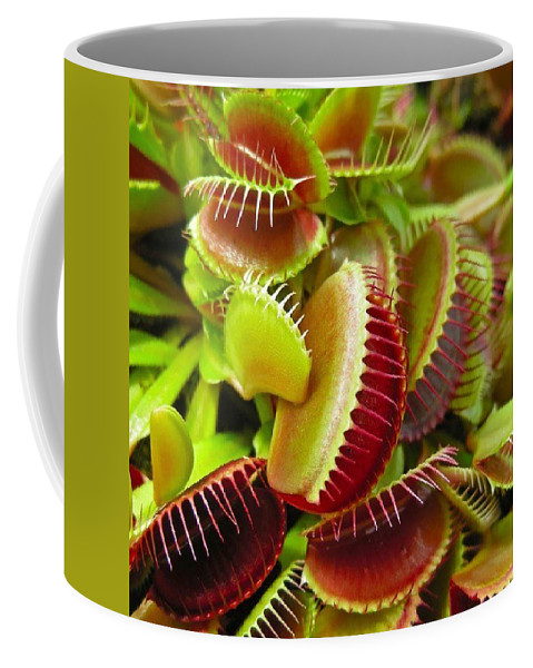 Nature Coffee Mug featuring the photograph Carnivores by Hoang Bui