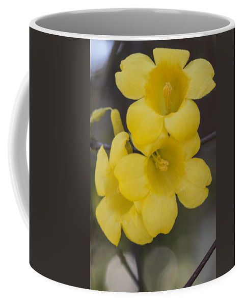 Carolina Jessamine Coffee Mug featuring the photograph Carolina Jessamine by Arlene Carmel