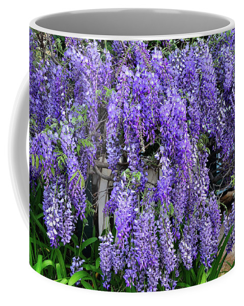 Photography Coffee Mug featuring the photograph Cascading Wisteria 2 by Kaye Menner