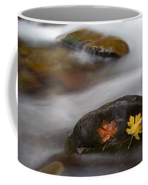 Leaves Coffee Mug featuring the photograph Castaways by Mike Dawson